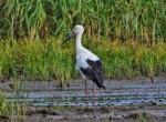 """上海这一发现四百余种珍禽的""""观鸟圣地"""",是否会因河道施工黯然失色?"""