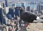 多一座城市,世界上就可能多了一群倒霉的鸟